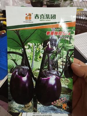 贵州省黔西南布依族苗族自治州兴义市茄子种子 ≥85% ≥96% 杂交种