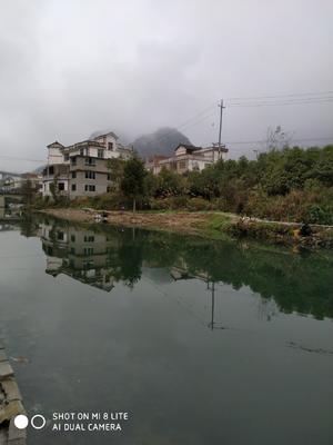 贵州省黔南布依族苗族自治州都匀市河鲤鱼 野生 0.5-3公斤
