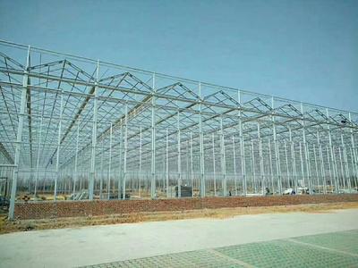 天津静海县玻璃温室大棚