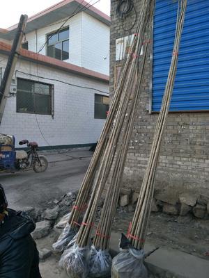山西省临汾市襄汾县107杨