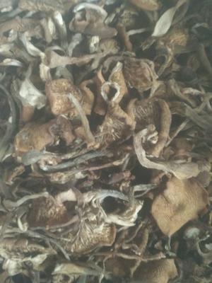 黑龙江省哈尔滨市木兰县野香菇干 箱装 1年以上