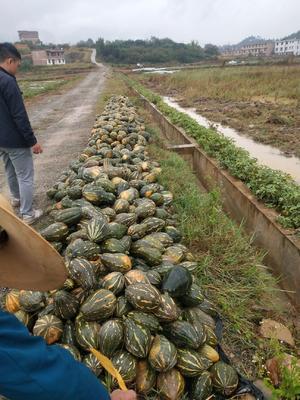 江西省赣州市于都县香芋南瓜 2~4斤 其他