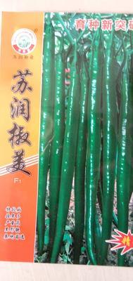 山东省临沂市兰陵县线椒种子 ≥97% ≥97% 杂交种