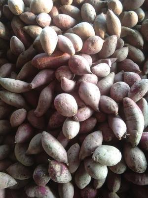 山东省淄博市张店区越南紫薯 3两~6两