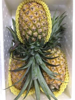海南省海口市琼山区海南菠萝 1.5 - 2斤