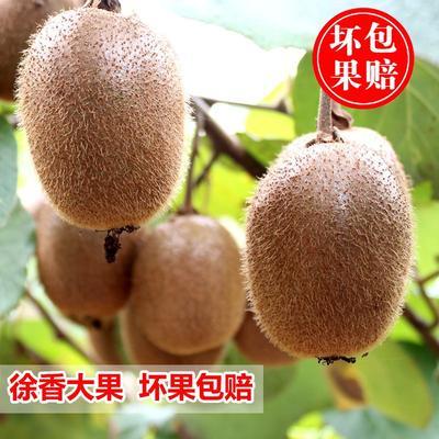 浙江省衢州市开化县徐香猕猴桃 90~100克