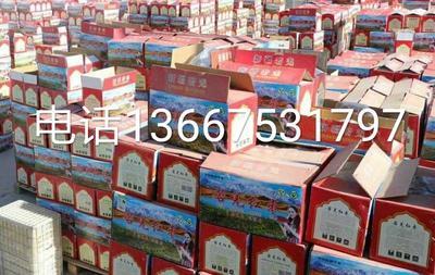 这是一张关于若羌红枣 合格品的产品图片