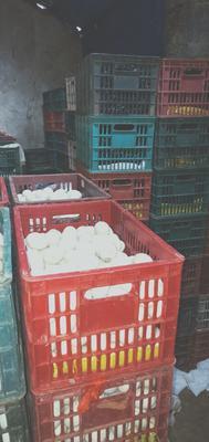 海南省儋州市儋州市海鸭蛋 食用 箱装