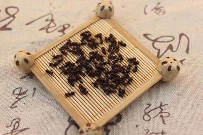 吉林省白山市浑江区蚂蚁