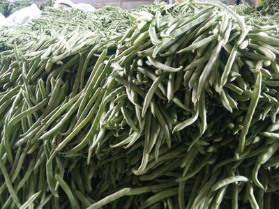 四川省凉山彝族自治州会理县四季豆种子