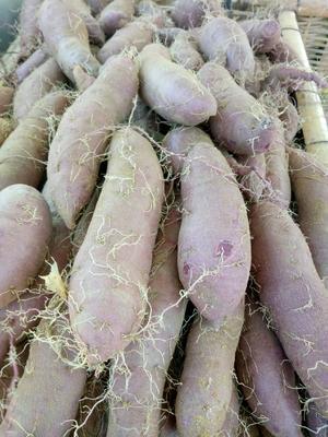 山东省潍坊市临朐县紫罗兰紫薯 混装通货