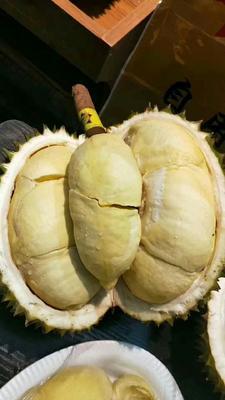 这是一张关于泰国金枕榴莲 80 - 90%以上 3 - 4公斤的产品图片