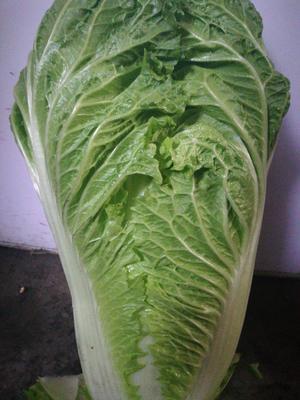 这是一张关于超绿先锋 3~6斤 净菜的产品图片