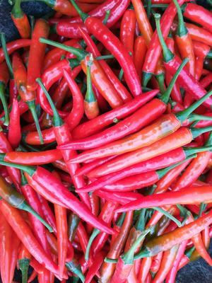 这是一张关于朝天椒 5~10cm 红色 中辣的产品图片