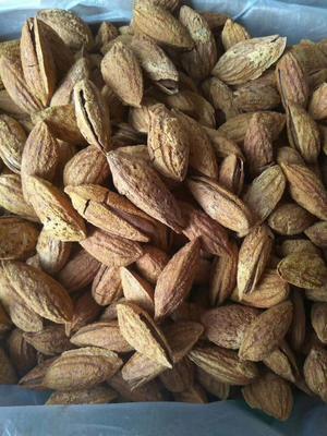 河南省郑州市管城回族区巴旦木 1年以上 带壳