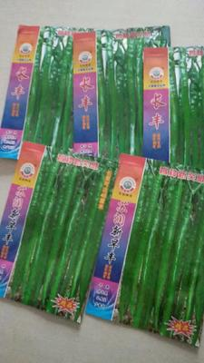 山东省临沂市兰陵县线椒种子 ≥95% ≥97% 杂交种