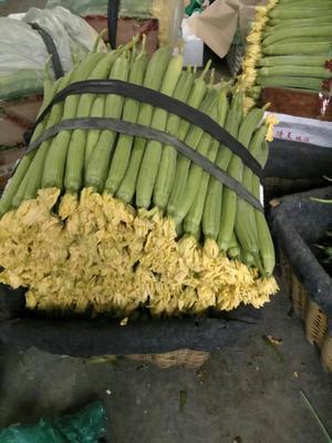 山东省潍坊市寿光市鲜花丝瓜 35cm以上