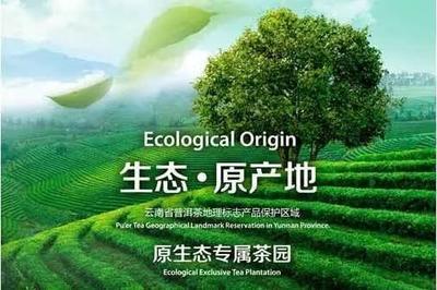 云南省普洱市思茅区普洱生态茶 盒装 特级
