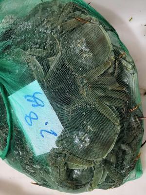安徽省宣城市宣州区高淳大闸蟹 4.0两以上 统货