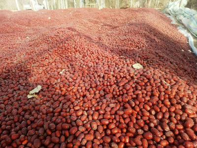新疆维吾尔自治区阿拉尔市阿拉尔市灰枣 合格品