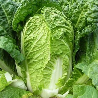 这是一张关于胶州大白菜 15斤以上 毛菜的产品图片