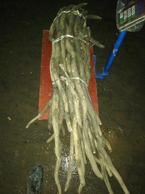 这是一张关于野生莲藕 3-5cm 35~40cm的产品图片