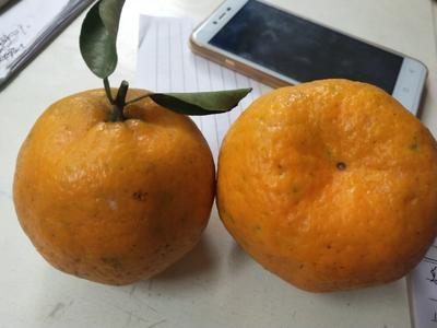 这是一张关于椪柑 3.5 - 4cm 2 - 3两的产品图片