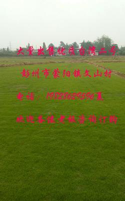 四川省成都市彭州市台湾草
