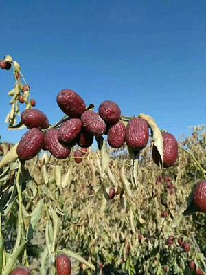 这是一张关于若羌红枣 一级的产品图片
