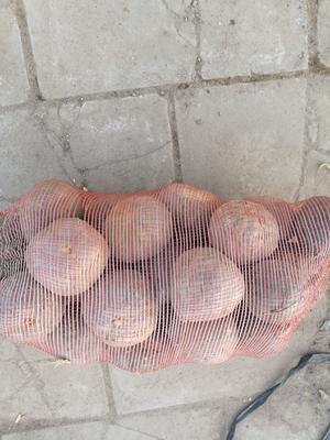 新疆维吾尔自治区巴音郭楞蒙古自治州库尔勒市板栗南瓜 0.7~1.0斤 扁圆形