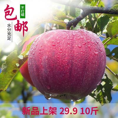这是一张关于冰糖心苹果 纸+膜袋 全红 85mm以上 的产品图片