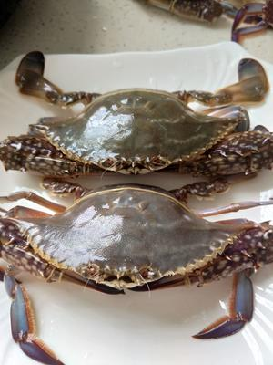 浙江省宁波市余姚市梭子蟹 4.0两以上 统货