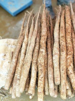 这是一张关于白玉山药 50~70cm的产品图片