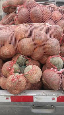 新疆维吾尔自治区巴音郭楞蒙古自治州焉耆回族自治县板栗南瓜 0.7~1.0斤 扁圆形