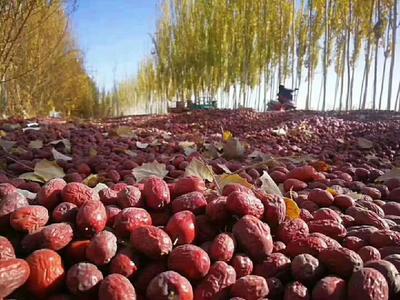 新疆维吾尔自治区新疆维吾尔自治区图木舒克市灰枣 统货