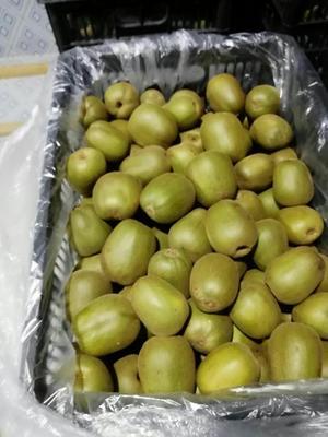 浙江省衢州市江山市红心猕猴桃 80~100克