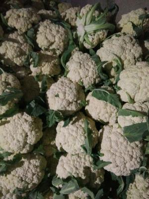 山东省德州市临邑县有机花菜 适中 2~3斤 乳白色