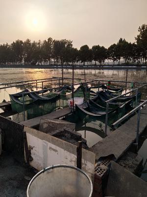 江苏省南京市溧水区固城湖大闸蟹 3.5-4.0两 公蟹