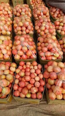 这是一张关于粉柿子 不打冷 硬粉 弧三以上的产品图片
