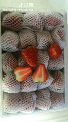 辽宁省大连市庄河市九九草莓 30克以上