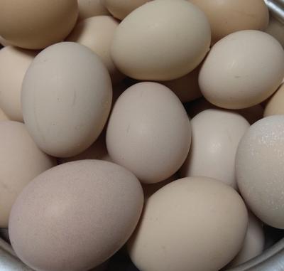 湖南省长沙市芙蓉区土鸡蛋 食用 散装