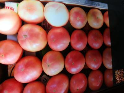 河南省南阳市邓州市粉果番茄 不打冷 硬粉 弧三以上
