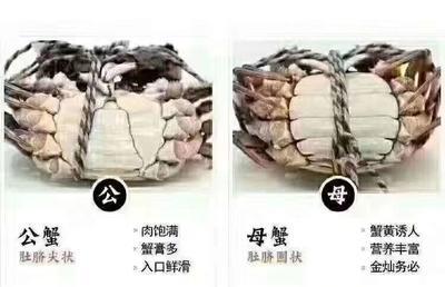广东省东莞市洪湖大闸蟹 2.5-3.0两 公蟹