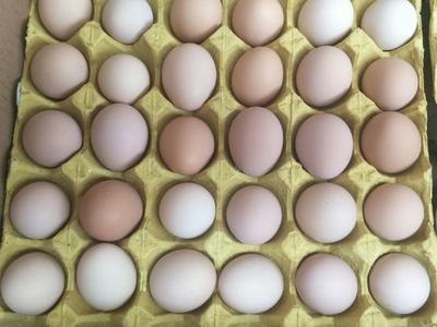 福建省泉州市晋江市土鸡蛋 食用 散装