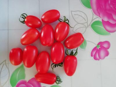 辽宁省沈阳市新民市千禧西红柿 不打冷 大红 弧二以上