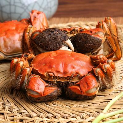 这是一张关于洪泽湖大闸蟹 2.0两 母蟹的产品图片