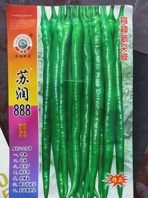 山东省临沂市兰陵县线椒种子 ≥85% ≥95% 杂交种