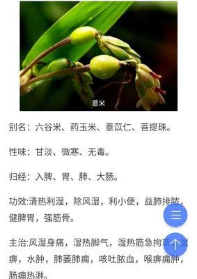 福建省三明市宁化县宁化糯薏米