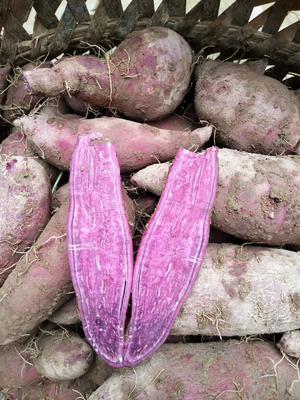 四川省乐山市犍为县越南紫薯 混装通货