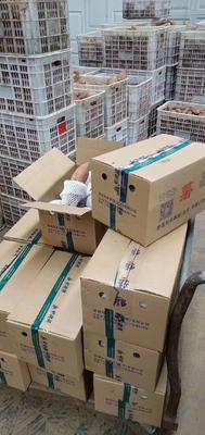 北京平谷区烟薯25 红皮 混装通货